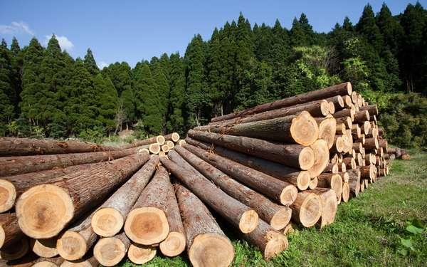 Прием древесины на переработку