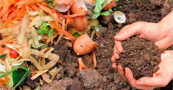захоронение органики