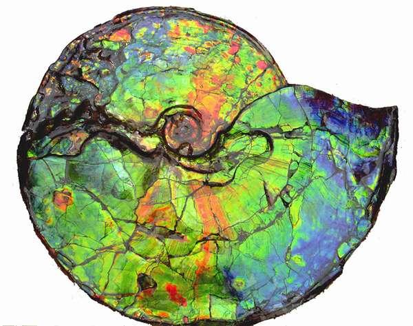 Аммолит — камень развития по законам Вселенной