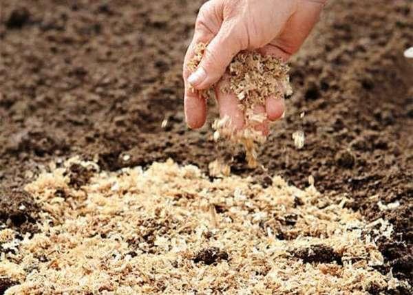 Добавка из опилок в почву