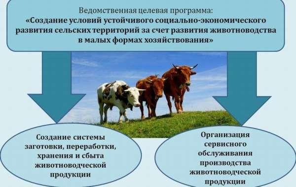 Животноводческая продукция